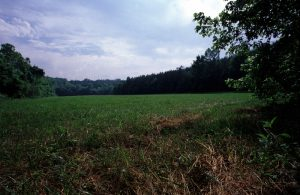 Natural Pasture at Redlair Farm and Forest