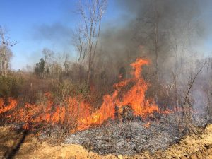 Prescribed burn on 62 acres at Buffalo Creek Preserve.