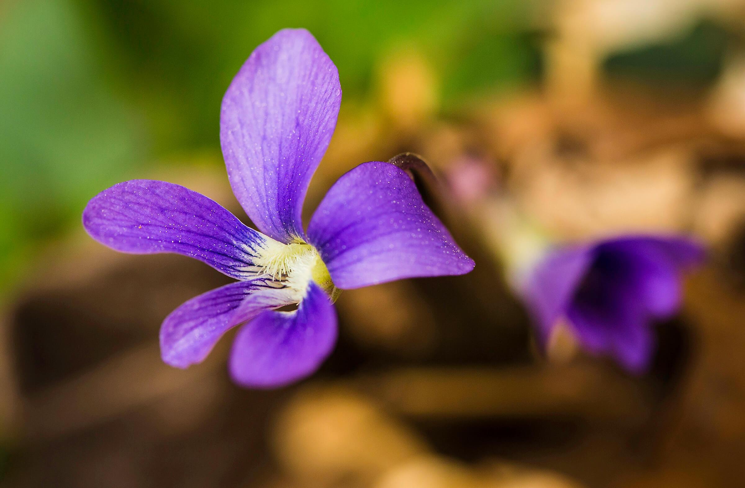 Photo: Catawba Wildflower Glen by Debbie Warren