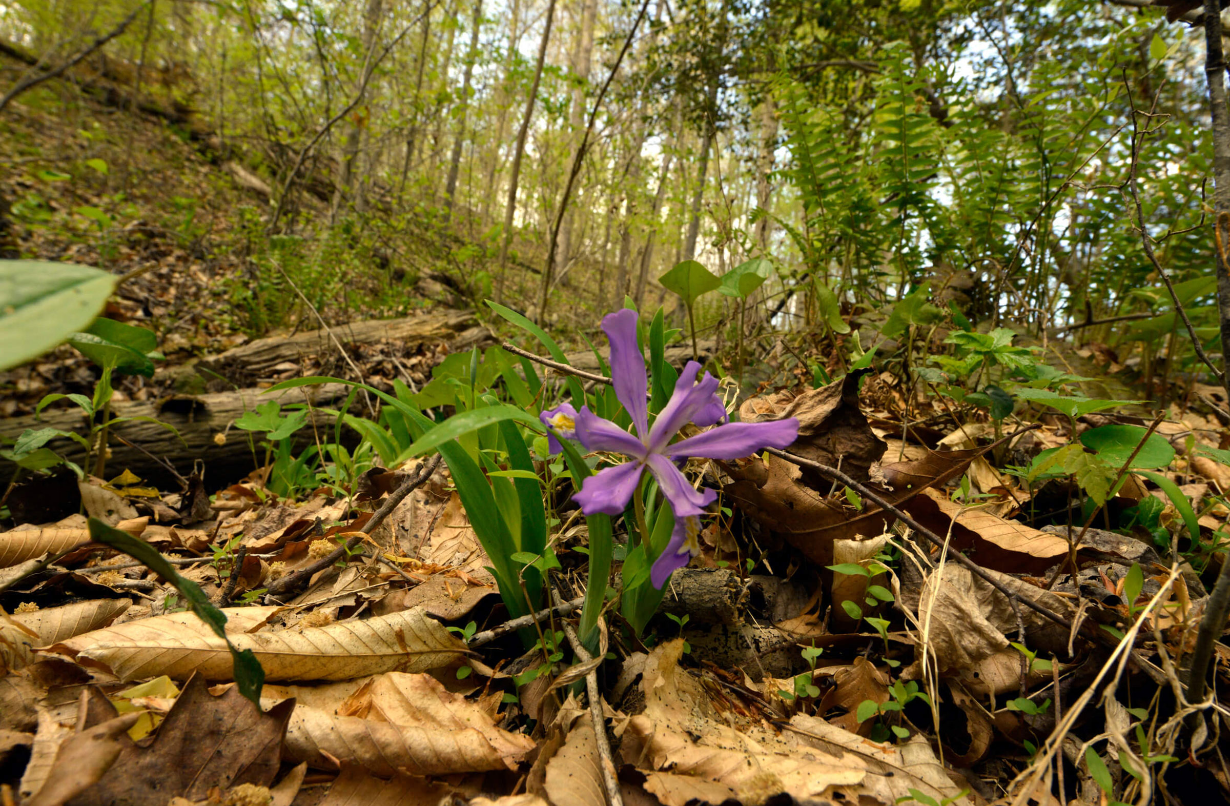 Photo: Catawba Wildflower Glen by Nancy Pierce