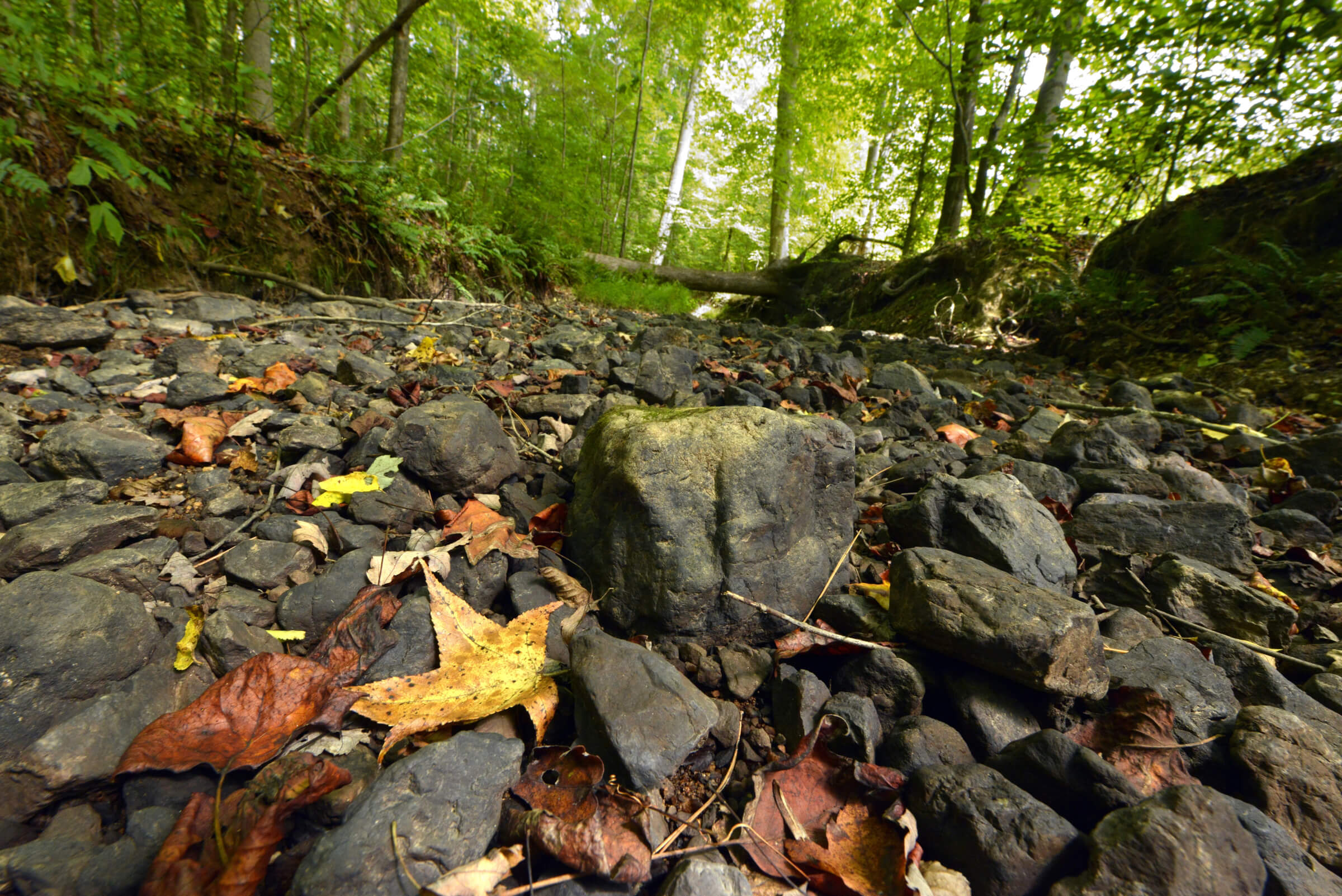 Photo: Hagans Forest by Nancy Pierce