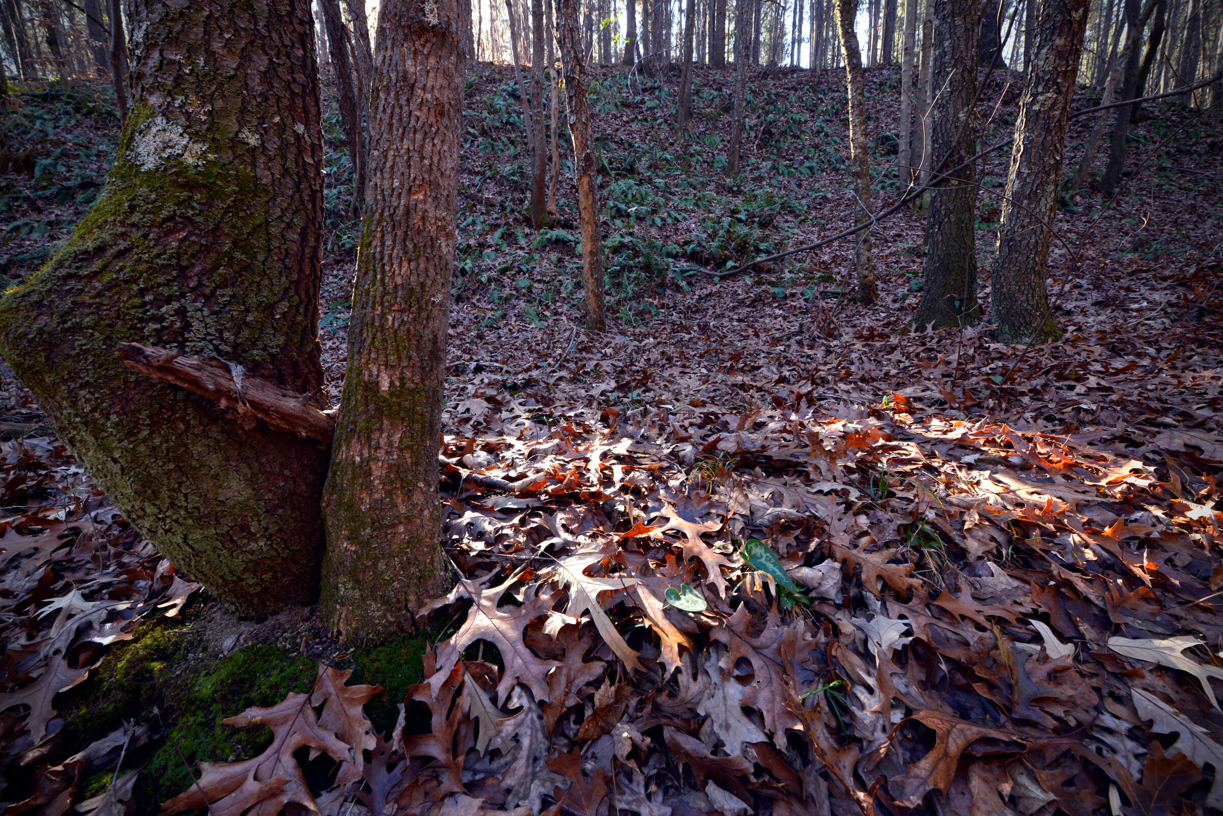 Photo: Mountain Creek by Nancy Pierce