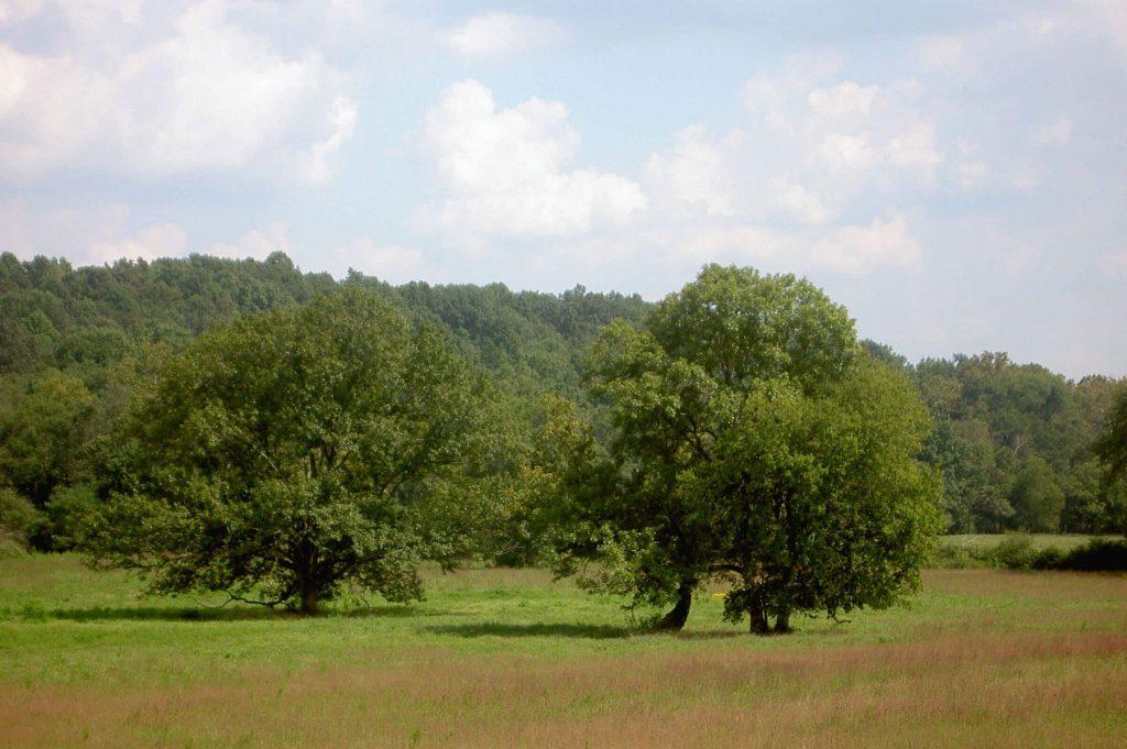 Photo: Riverbend Conservation Area by Nancy Pierce