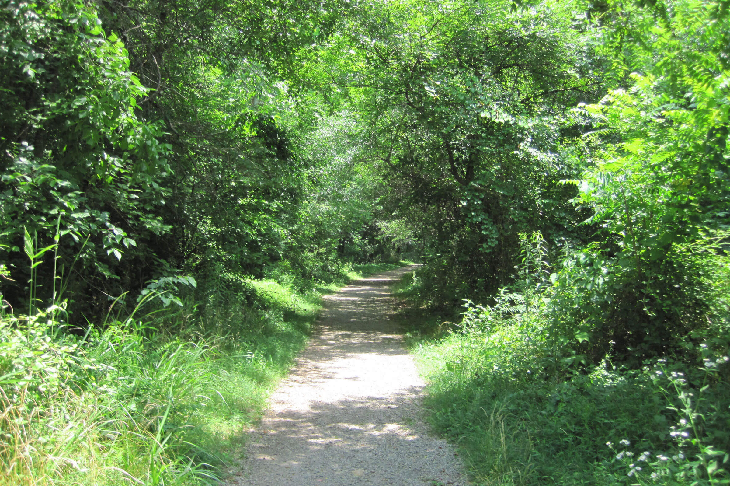 Photo: South Fork Rail Trail by Amy Moore