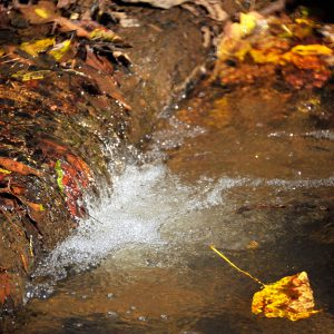 Photo: Forney Creek Conservation Area by Nancy Pierce