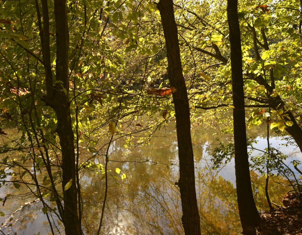 Photo: Seven Oaks Preserve by Nancy Pierce