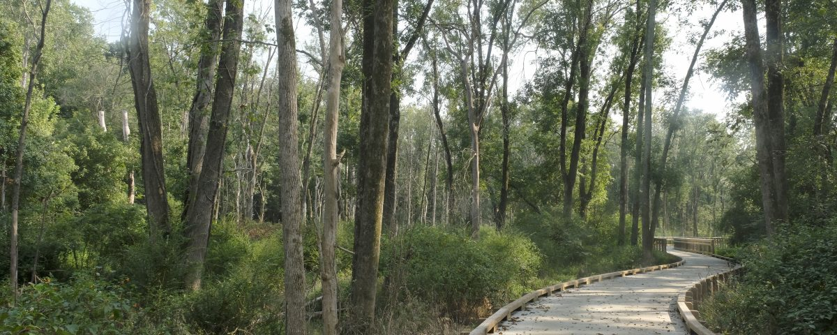 Toby Creek Greenway, section that is new in 2017. This is the raised path through a wet areas of the new Toby Creek Greenway section between University City Blvd and Rocky River Road.