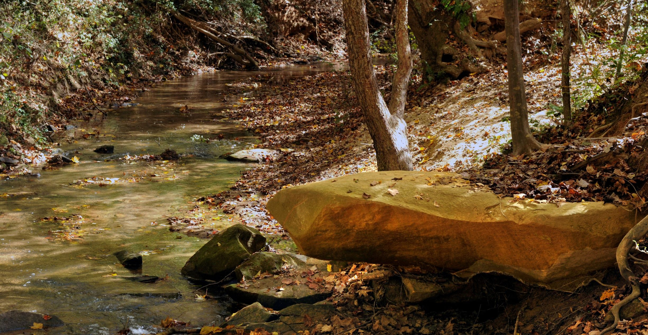 Image of creek with rocks and fall leaves in the water, bordered by hardwood trees. The Conservancy is improving water quality in Forney Creek.