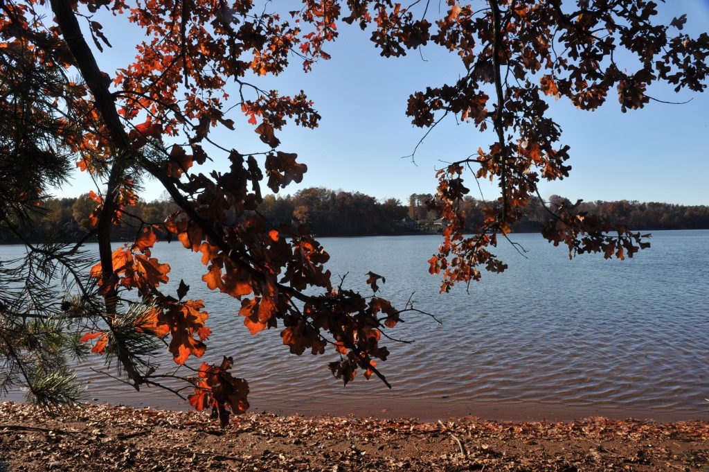 Seven Oaks Preserve, on a Lake Wylie Cover behind the Daniel Stowe Botanical Gardens